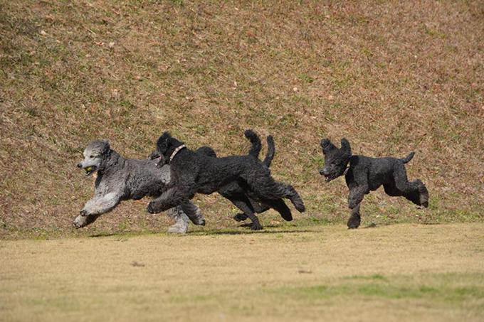 のびのびと遊ぶ仔犬たち