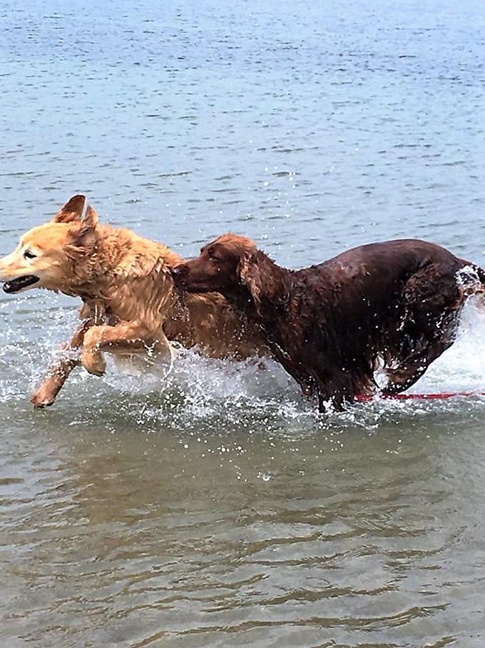 水遊びも大好き!