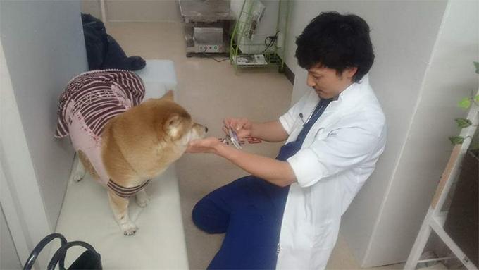 お世話になっている獣医さんと。とっても仲良しだよ!