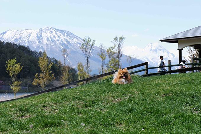 子犬時代にきちんとしつけたので、旅先でもトラブルは皆無。長野にて(w680)