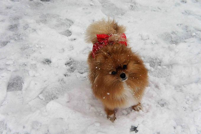 雪遊びも大好き!(w680)
