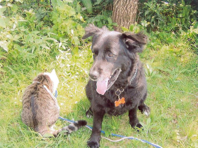 伊豆の実家の庭で、一緒に暮らす猫と(w680)