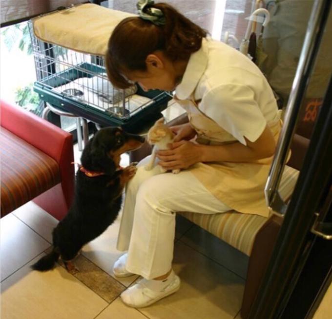 動物看護師として全力で働く毎日(w680-1)