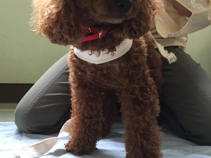 犬 ボディラップ