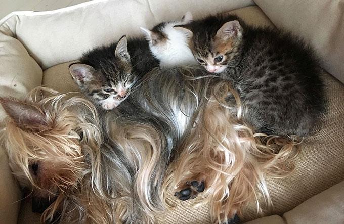 子猫 愛犬