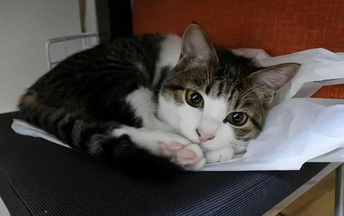 猫 ねこ ネコ 美猫
