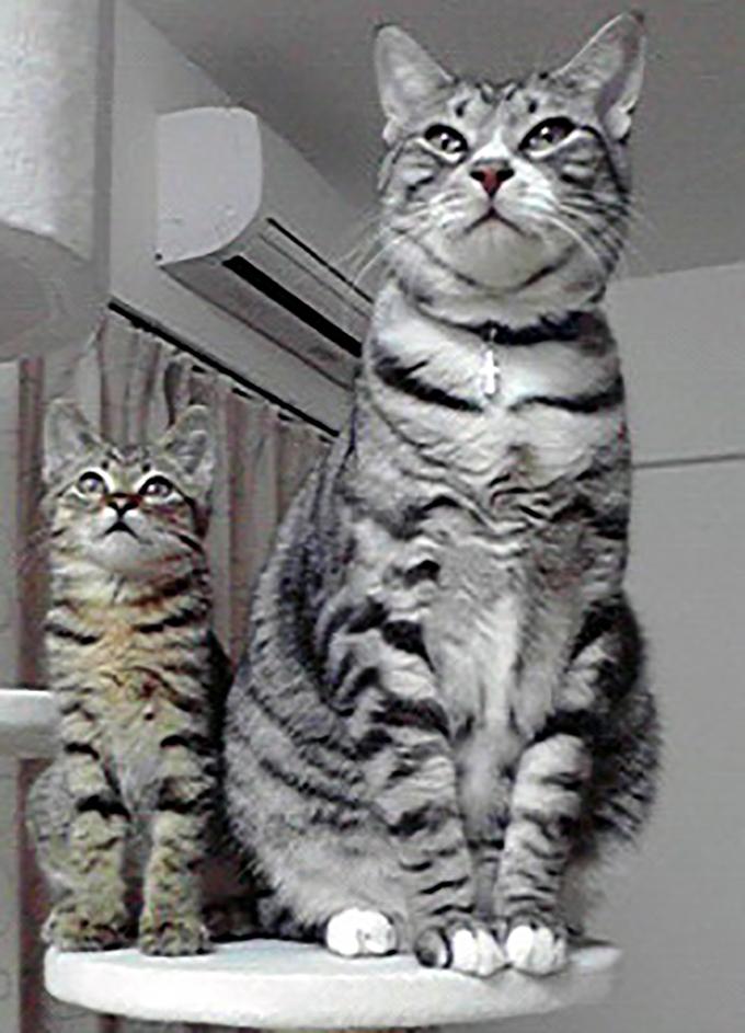 ねこ 猫 愛猫 兄弟