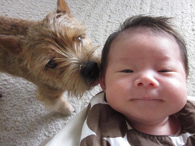 愛犬 犬 イヌ 赤ちゃん