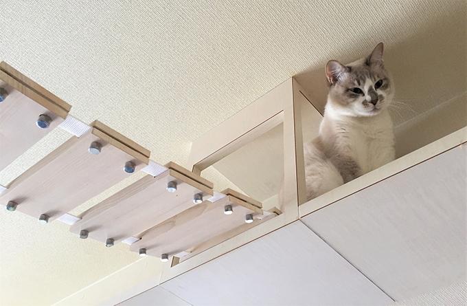 ねこ 猫 キャットウォーク