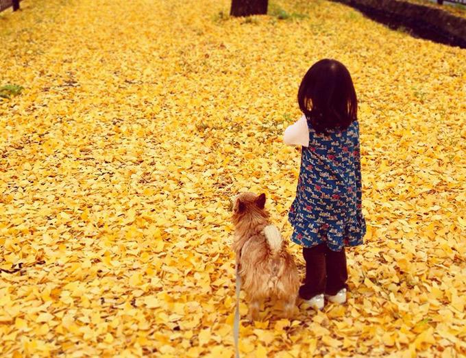 愛犬 イヌ 子ども