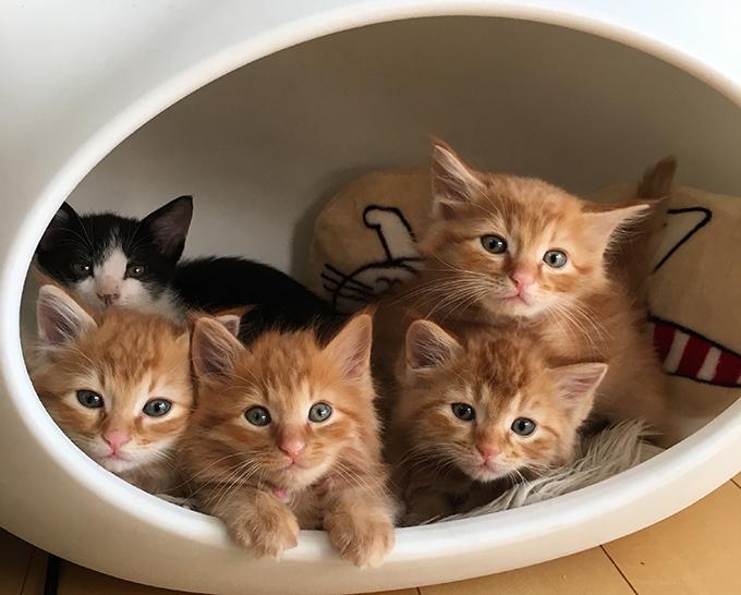 子猫100匹の新しい家族を見つけた、猫ボランティアの10年間 – ニッポン ...