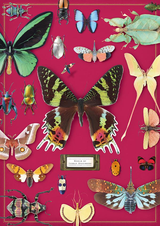 密やかな部屋 きらめく昆虫標本 三菱地所アルティアム