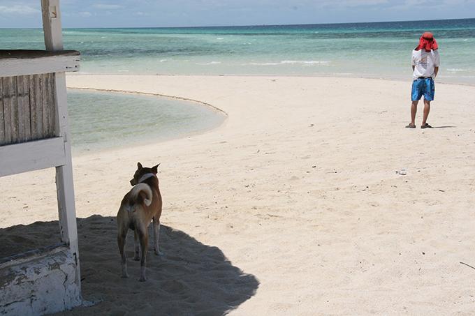 ビサヤ犬 イヌ 犬 いぬ フィリピン セブ島