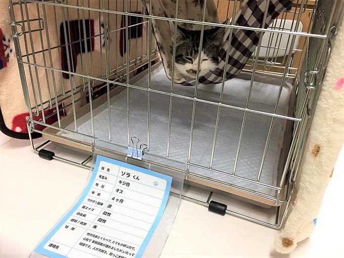 猫 ねこ 譲渡会 区民センター