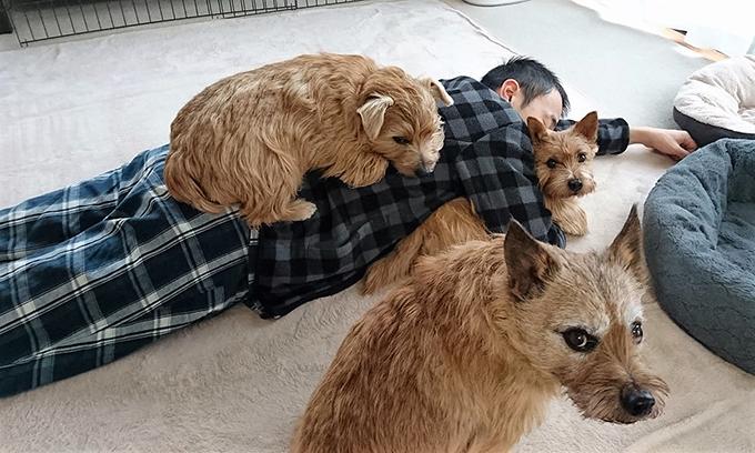 多頭 多頭飼育 愛犬 イヌ 犬 いぬ テリア ノーリッチ ノーフォーク 楽しい