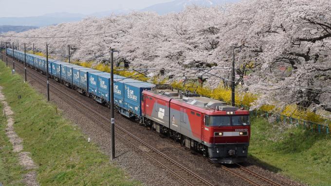 JR貨物 EH500形 電気 機関車 貨物列車 東北本線 大河原 船岡