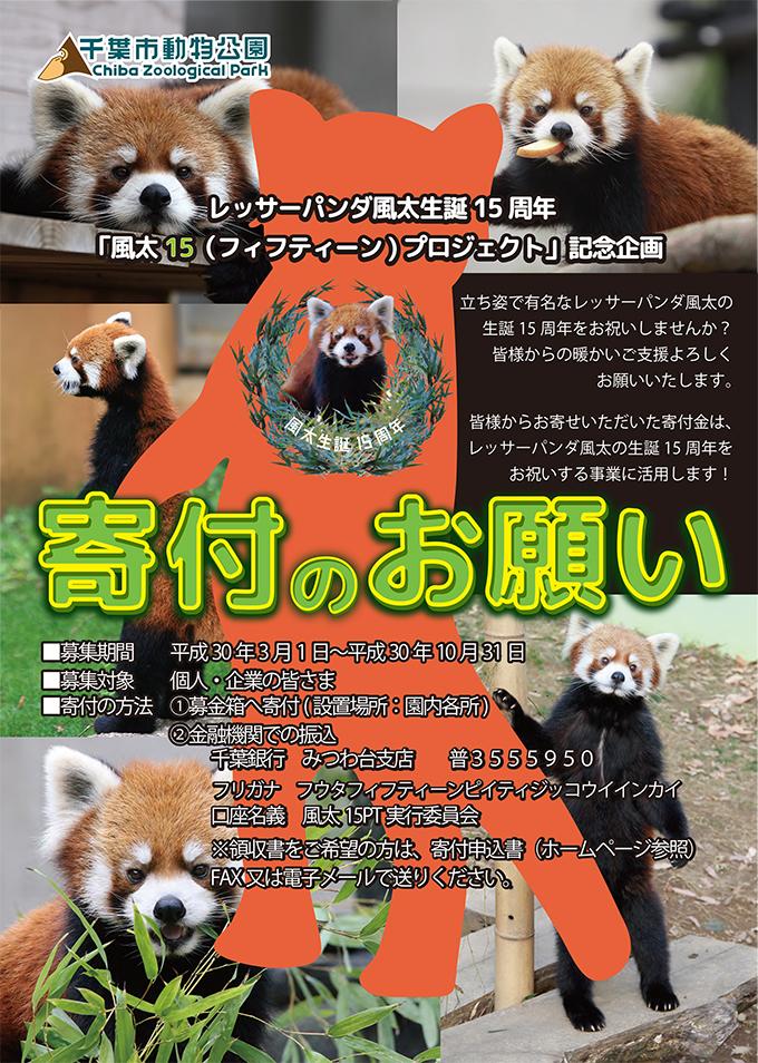 レッサーパンダ 風太 15 プロジェクト 寄付 千葉市 動物公園