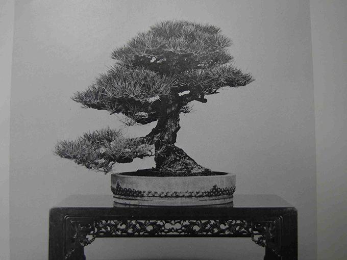 愛知園 盆栽