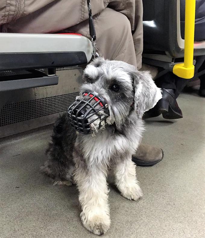 チェコ ドッグライフ イヌ 犬 いぬ ドッグ 地下鉄 マズルガード