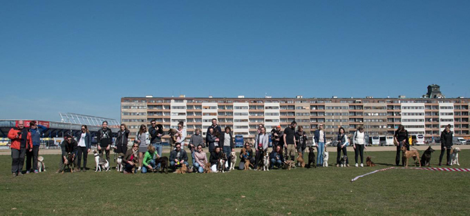 チェコ ドッグライフ イヌ 犬 いぬ ドッグ トレーニングスクール グループレッスン ペットホテル