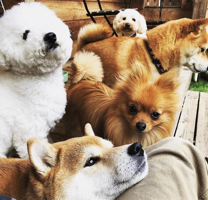 ペットホテル ドッグトレーニング 預かり中 犬 いぬ イヌ 愛犬 多頭