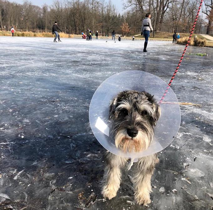 チェコ ドッグライフ イヌ 犬 いぬ ドッグ 散歩 池 氷