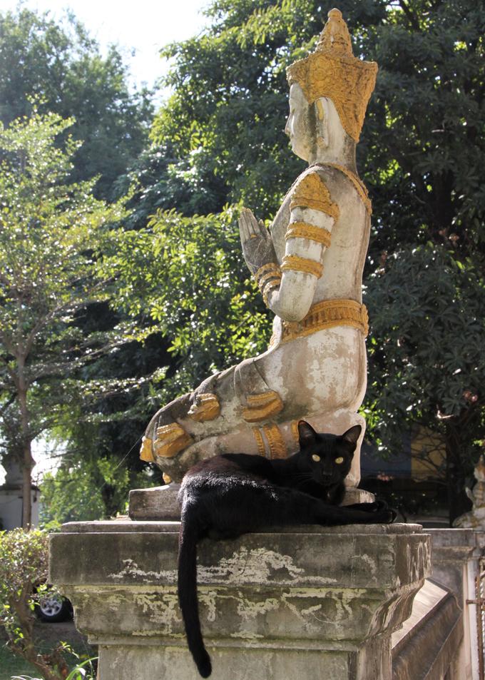 猫 ねこ ネコ タイ 寺院