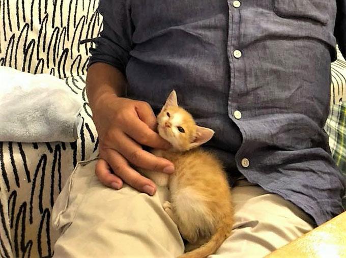 ネコ ねこ 猫 子猫 子ねこ 仔猫 子ネコ ミルクボランティア