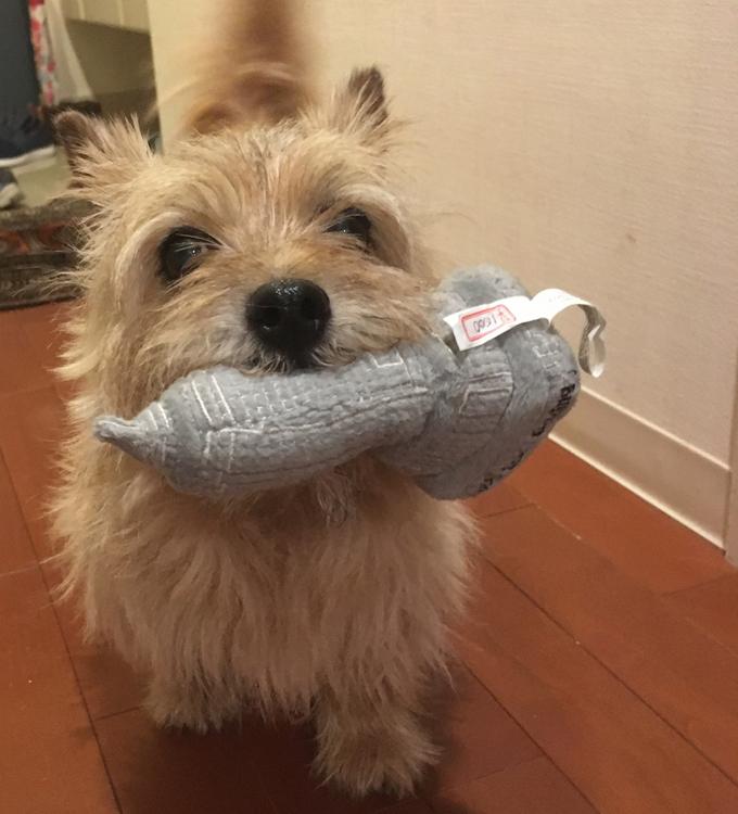 イヌ いぬ 犬 愛犬 ペット 室内 暑い 元気