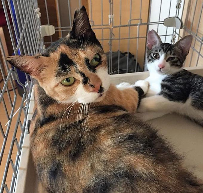 ペット 猫 ネコ ねこ 病院 動物病院 去勢手術