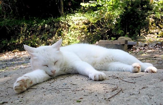 白猫 ねこ ネコ 猫 白 ペット 迷い猫 迷子猫 迷子