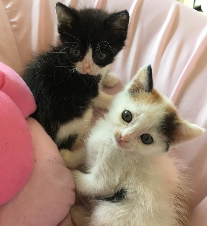 外猫 野良猫 未避妊 仔猫 出産 猫 ねこ ネコ 迷い猫 迷子猫 迷子