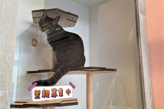 マイクロチップ 未装着 飼い主 不明 動物病院 里親 募集中 迷い猫 迷子猫 ねこ ネコ ペット