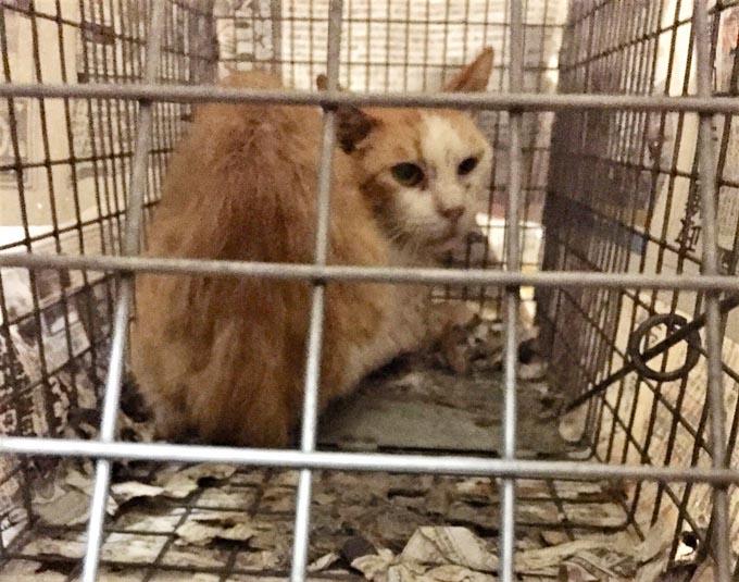 ペット 猫 ネコ ねこ 病院 動物病院 去勢手術 不妊手術 去勢