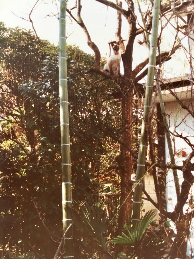 ねこ ネコ 猫 迷い猫 迷子猫 迷子 ペット 行方不明 里親 木登り