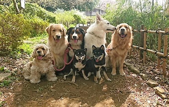 人と犬との憩いの場所 セラピードッグ 犬 保護犬 セラピー グレートデン