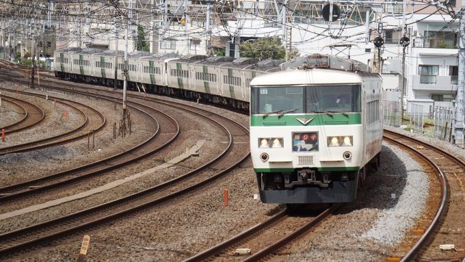 185系電車 特急 踊り子 東海道本線 戸塚~大船間 崎陽軒 えび エビ しゅうまい シュウマイ