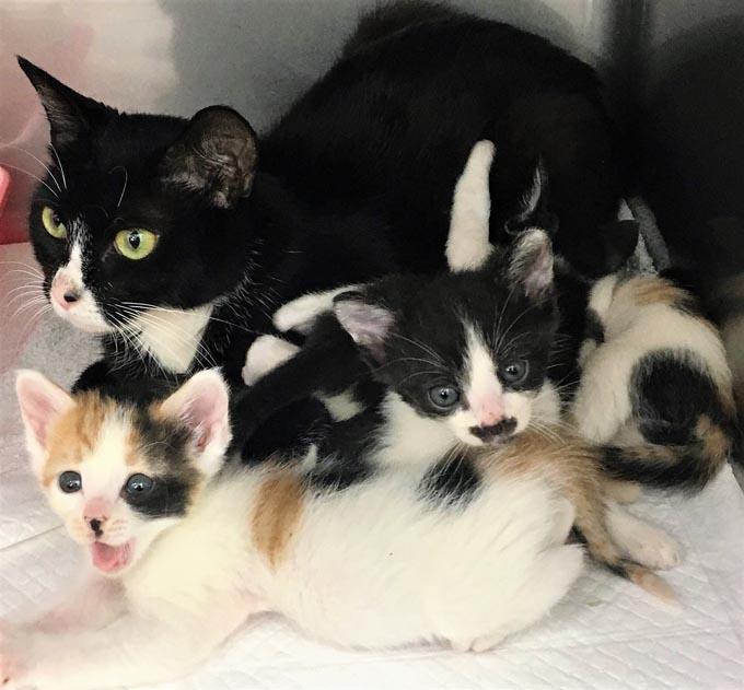 フォスターサロン ブリーダー ベンガル ネコ ねこ 猫 保護 トリマー なないろ動物病院