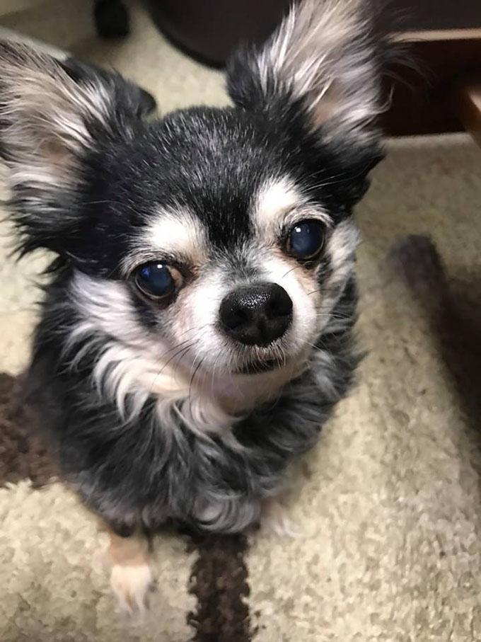 西日本豪雨 豪雨 西日本 実話 絵本 ペット いぬ イヌ 犬 被災 被災地 避難