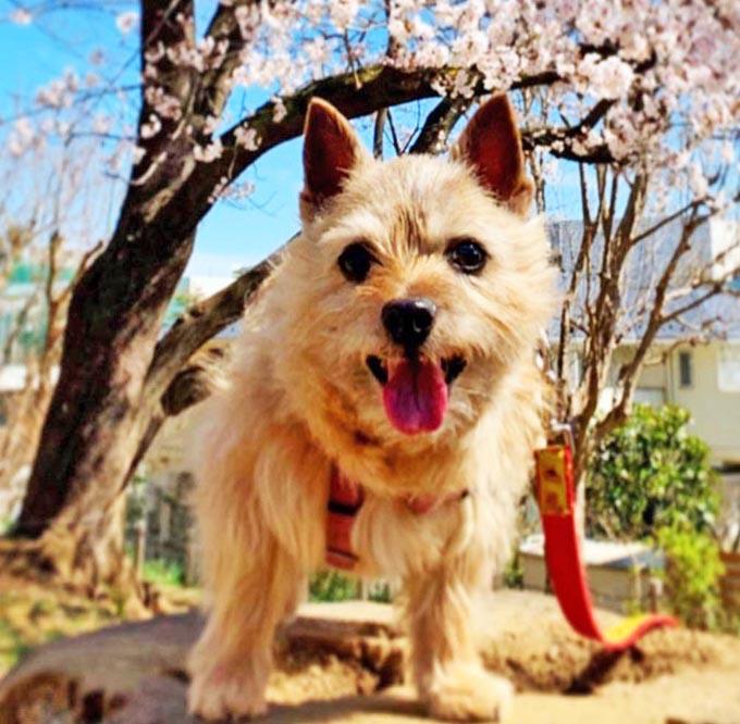 老犬の 心 の健康も大切だと知った飼い主の行動の変化とは ニッポン