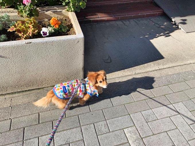 コロナ 犬 散歩