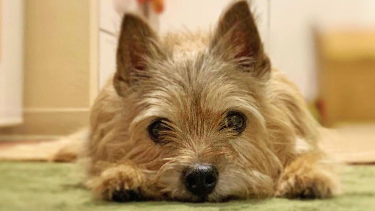 トイレ 食べる 犬 シート