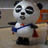 参加者に見つめられた京成パンダ