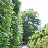 亀ヶ谷坂切通への道
